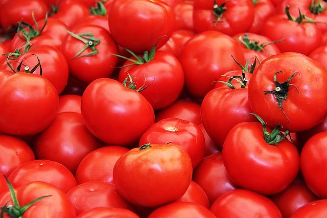 červená rajčata