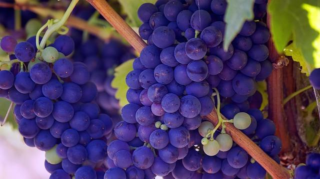 růžové hroznové víno