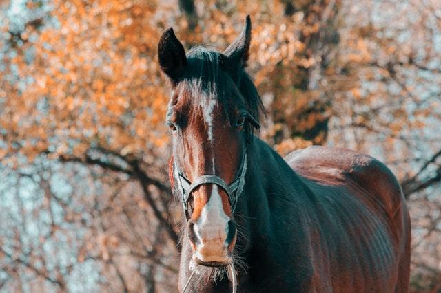 Tmavý kůň